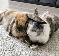 jouw konijn – nibbit&loulou
